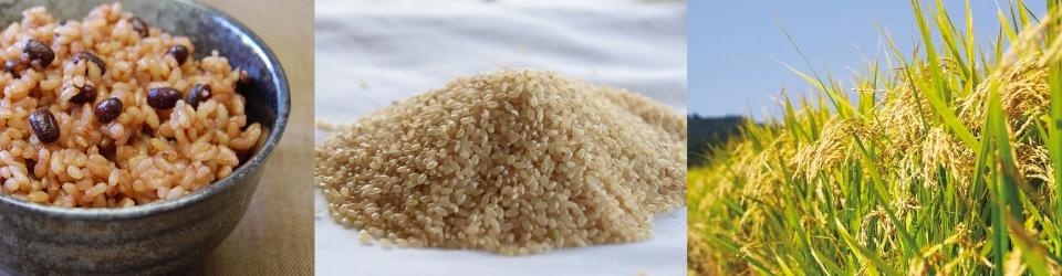 酵素玄米の炊飯器、比較してわかった究極の炊飯器!